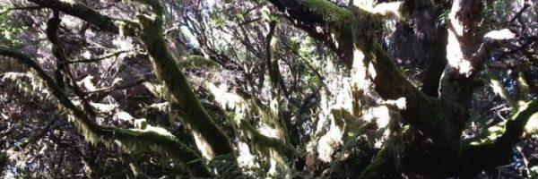 foresta-la-llania