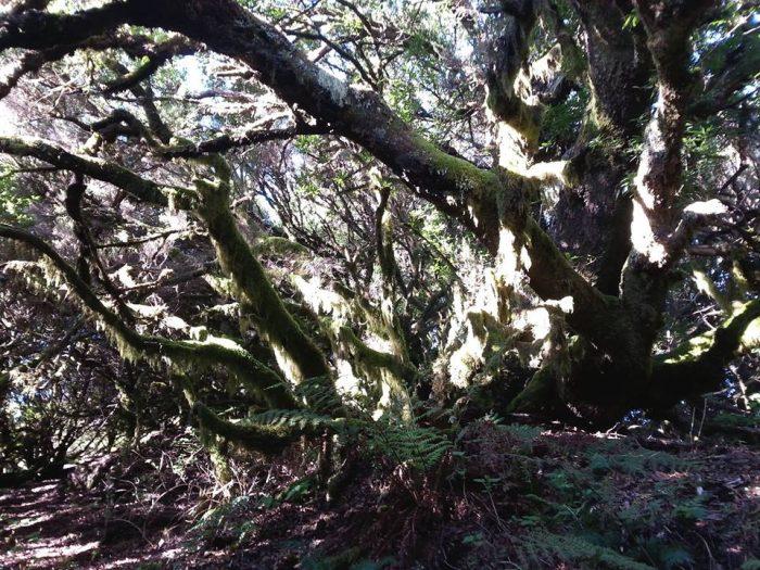 cosa-vedere-foresta-llania